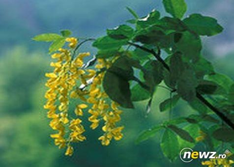 flori htg